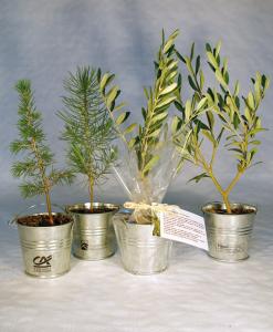 Plant d'arbre en pot zinc