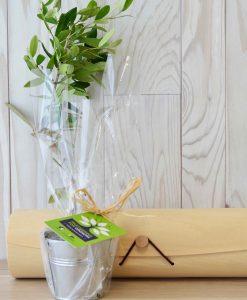 Plant d'arbre en tube bois