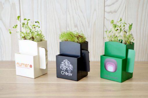 Kit de plantation écologique ARBRE A BULLES